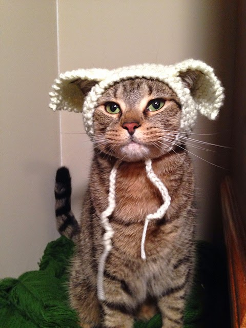 Wearing the WayShower Hat: It's Fun! Cat-in-hat6