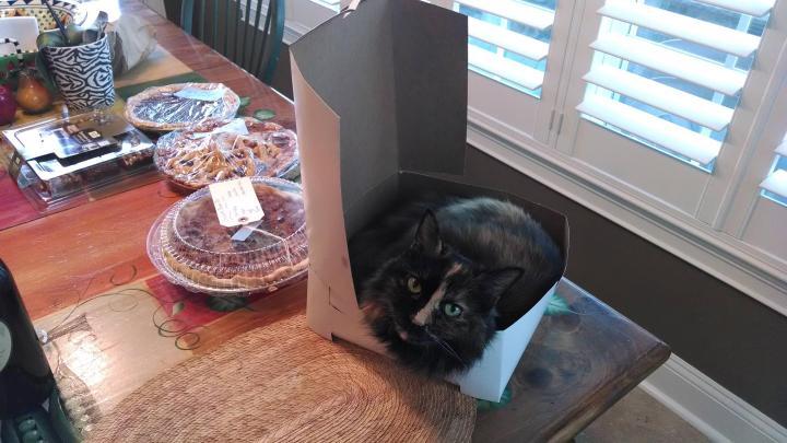 cat-pie2