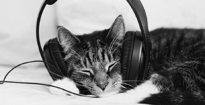 cat-with-headphones-e1458783711313_1024