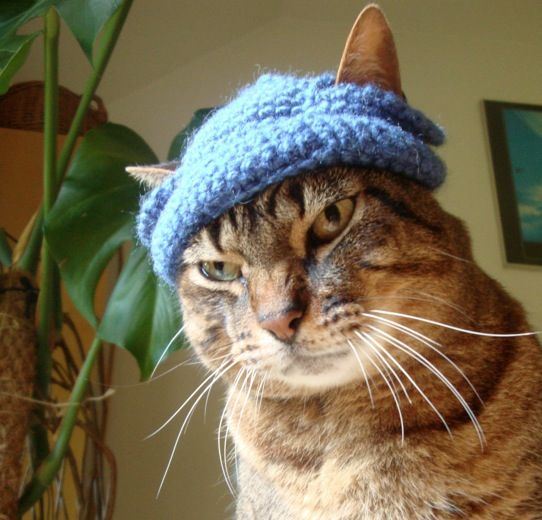 Wearing the WayShower Hat: It's Fun! Cats-love-hats