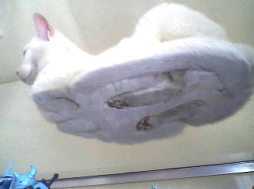 cats-sitting-on-transparent-glass-17