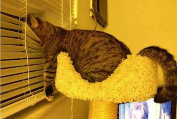 cats-sleeping-awkward-positions-18