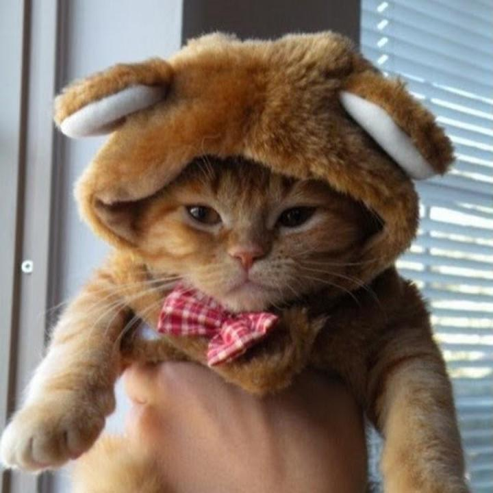 Wearing the WayShower Hat: It's Fun! Funny-pictures-of-cats-wearing-4674