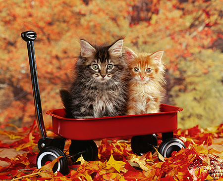 get-on-the-cat-wagon
