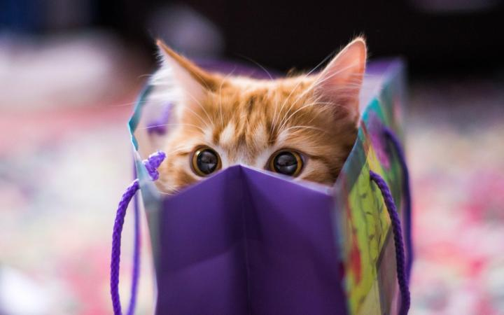 cat-in-da-bag