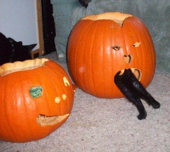 cat-in-da-pumpkin