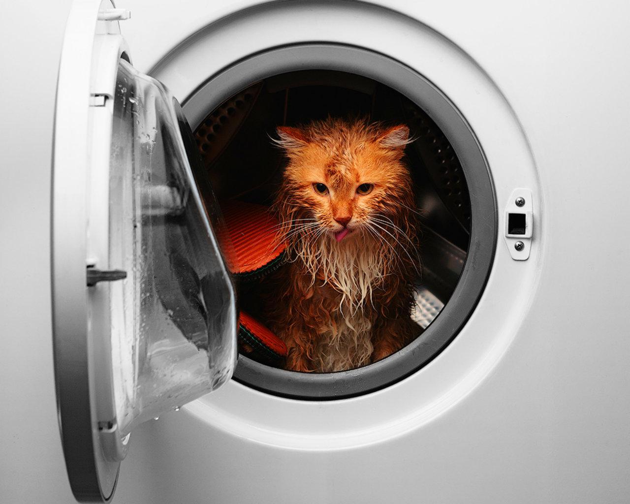 cat_in_the_machine1