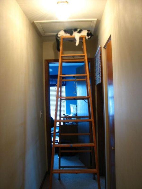Climbing_Cat