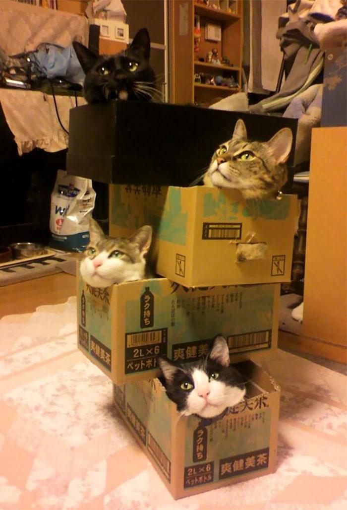 funny-cat-272-10