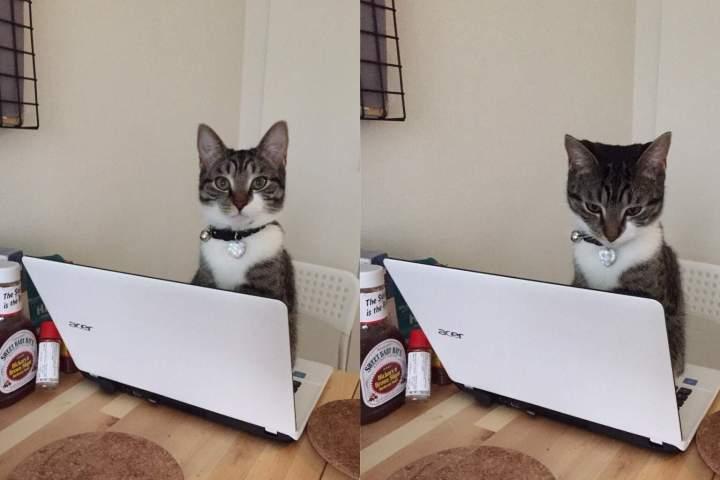 funny-cat-331-33