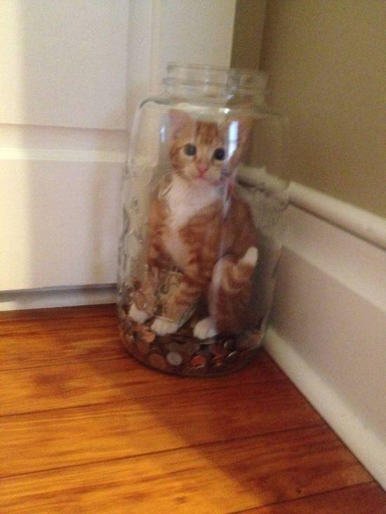 invisible-cat