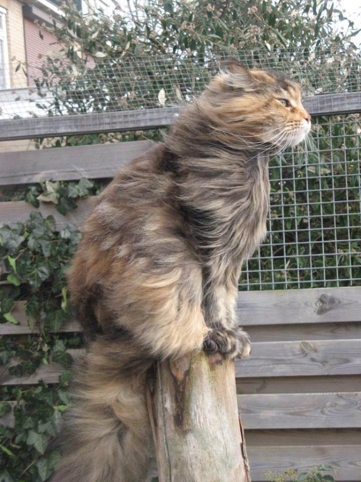 cat-against-the-wind