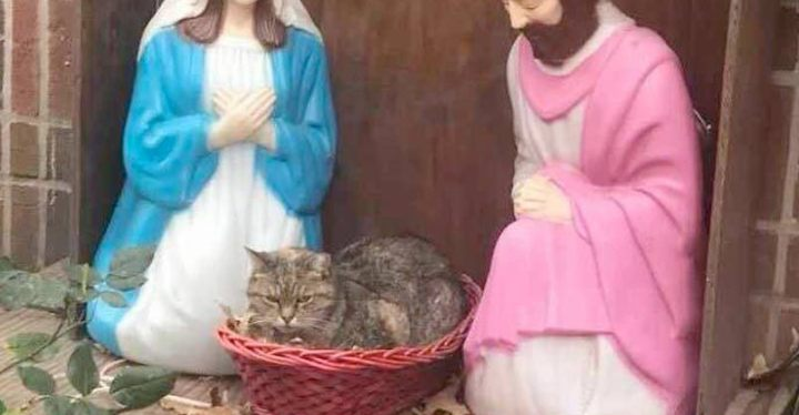 cat-nativity