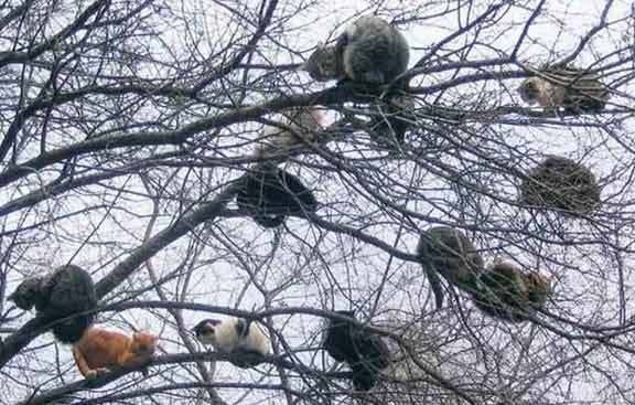 cats_in_tree