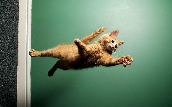 Animals___Cats___The_cat_flies_through_the_air_046686_