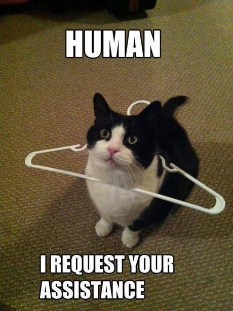 funny-cat-memes