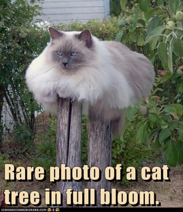 funny-cat-tree