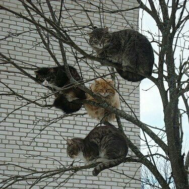 funny_cats_up_a_tree_5776295587