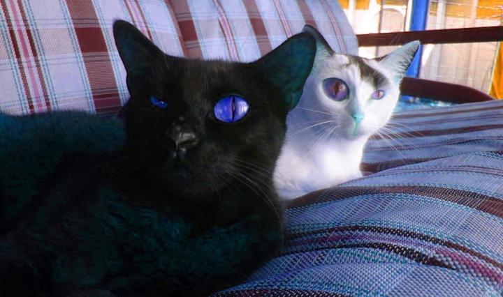 stranger_cats