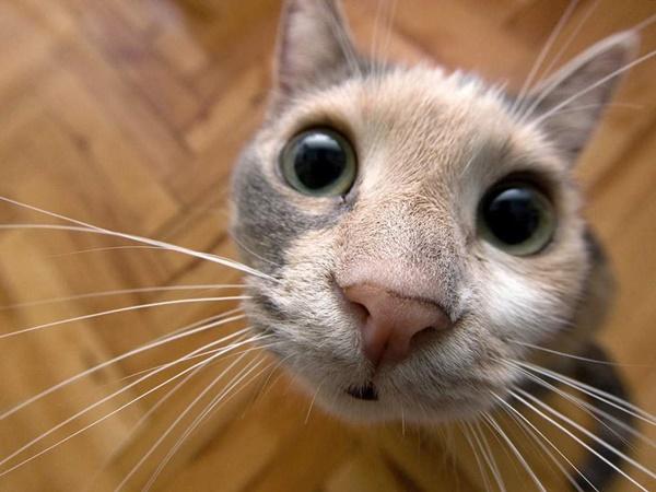 weirdcat