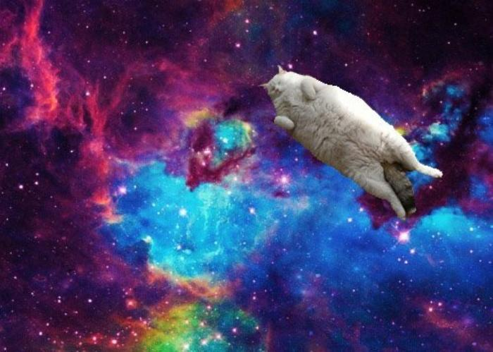 It's an Energy Thing Cat-in-space
