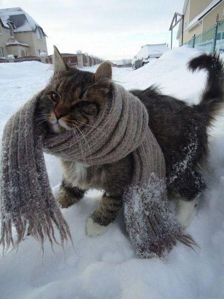 cold-cat