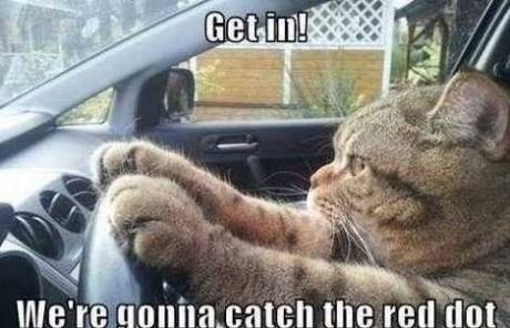 funny-lolcats-cats-in-car-going-catch-red-dot-lol-humor-joke-meme-photo-pic