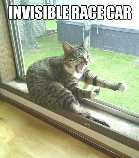 Top-30-Funny-cat-Memes-Funny-pics