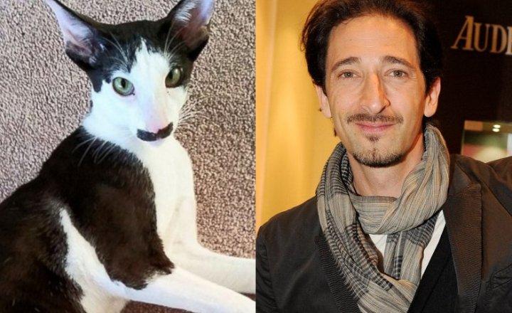 Adrian-Brody-Cat