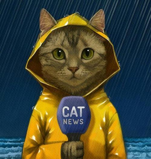 cat-news