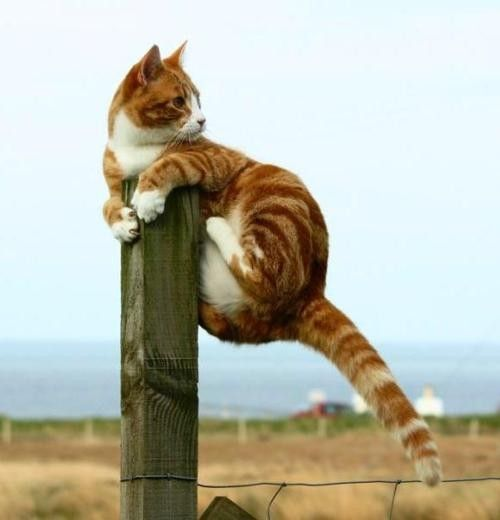 cat-post