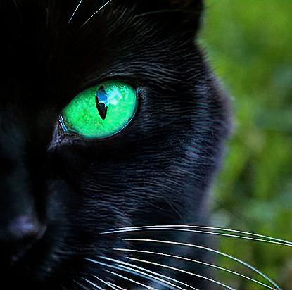 green-eyed-cat2