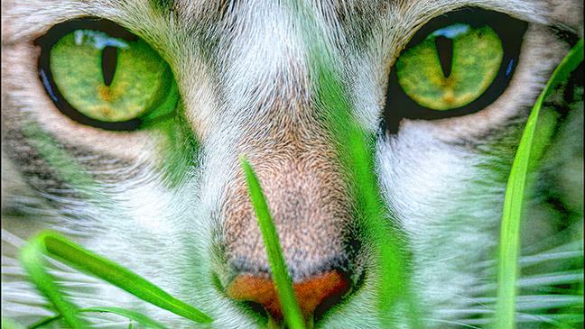 green-eyed-cat_sm