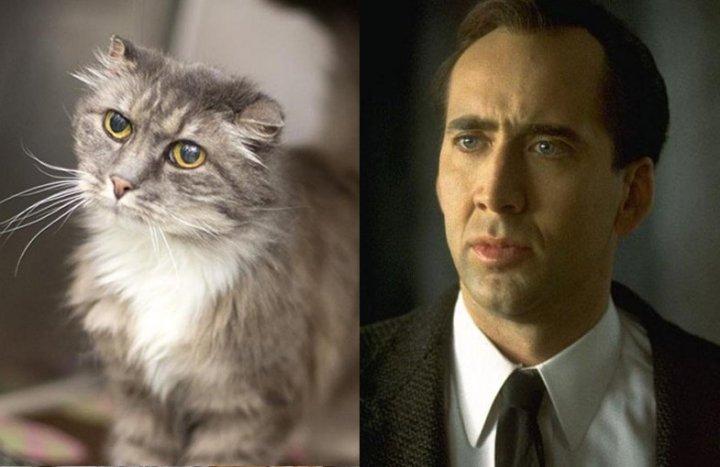 Nicolas-Cage-Cat