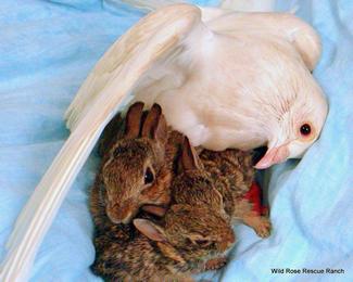 noah-bunnies-6