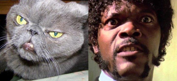 Samuel-L-Jackson-Cat