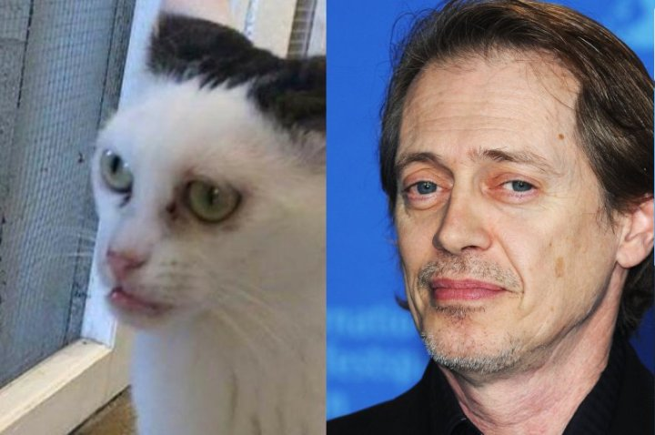 Steve-Buscemi-Cat