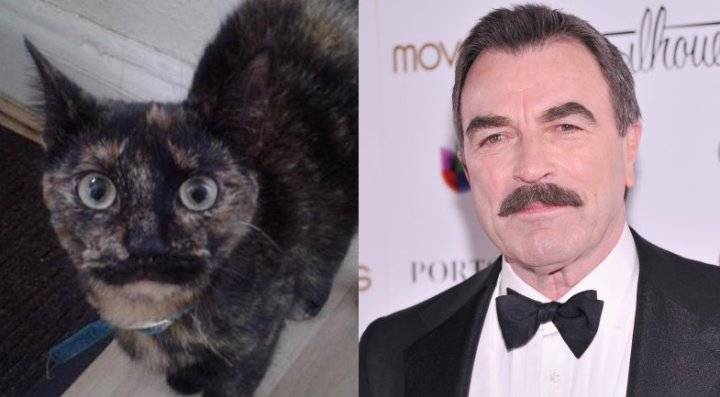 Tom-Selleck-Cat