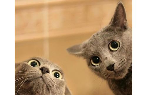 20-Funny-Shocked-Cat-Memes
