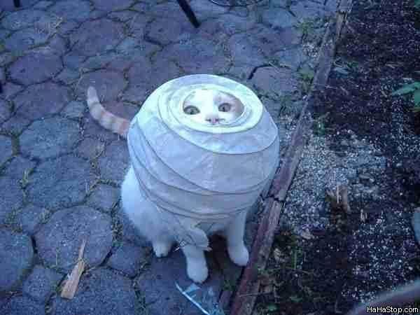 Alien_Cat581