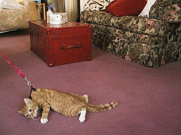 cat-drag