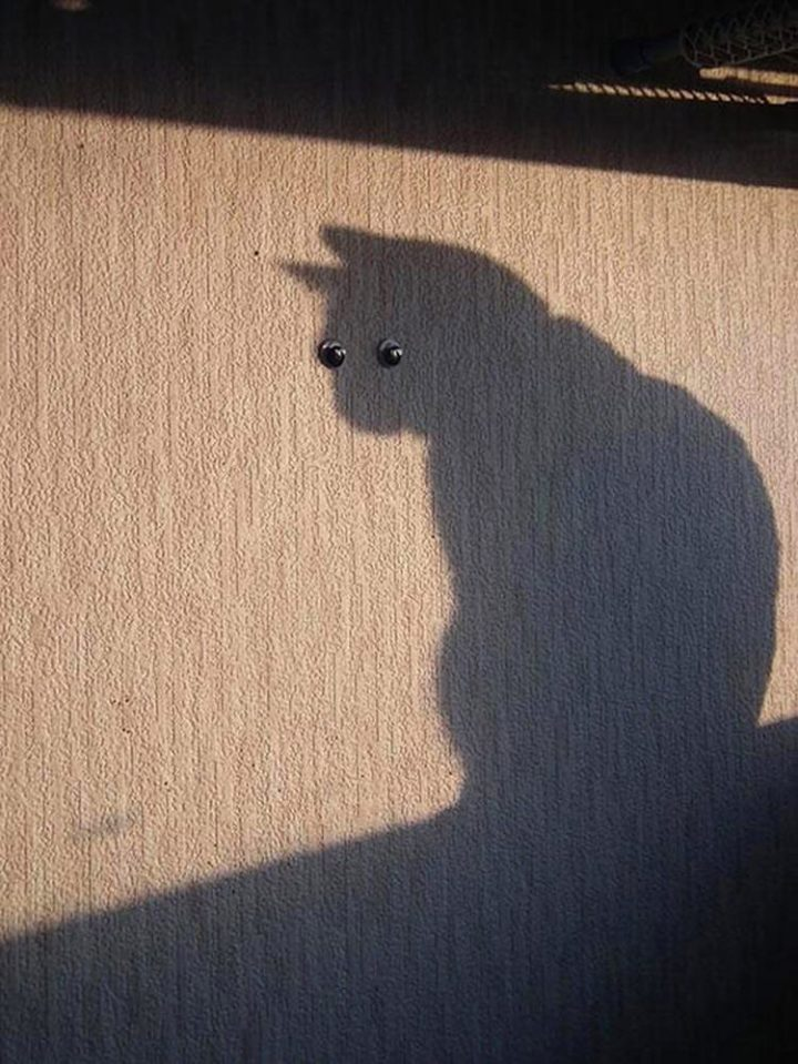 perfectly-timed-cat-photos-funny-3