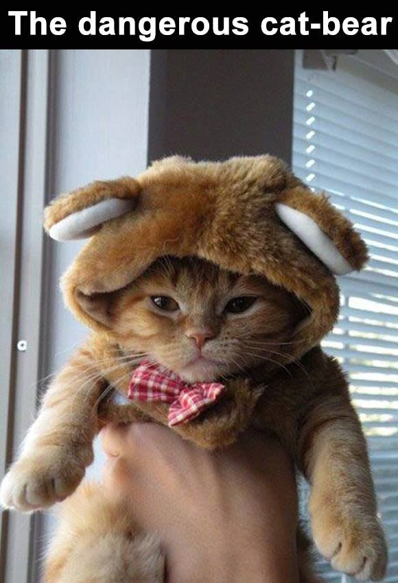 173653-Funny-Cat-In-A-Bear-Costume