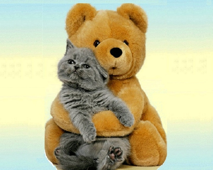 Bear-and-Cat-Wallpaper-cats-28362989-1280-1024