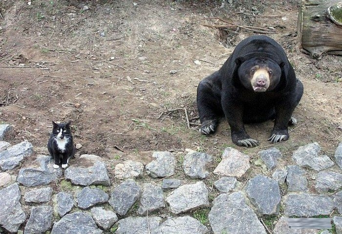 Bear-and-Cat