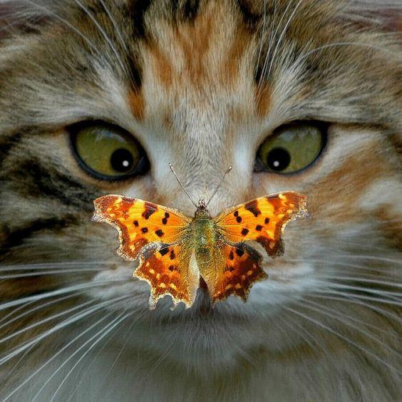 cat-eyed