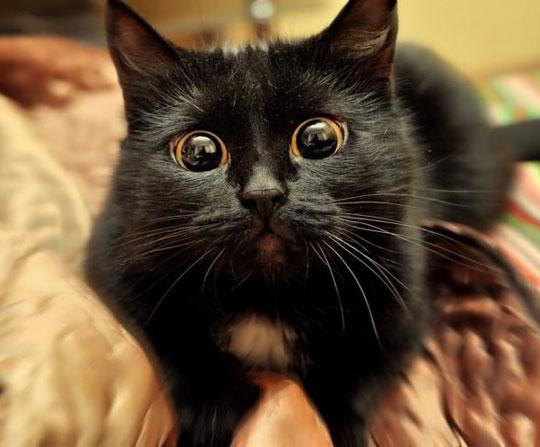 cat-eyes