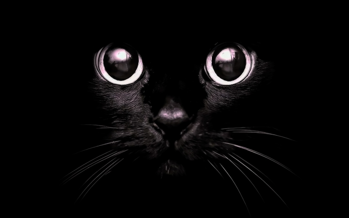 cat-eyes-light