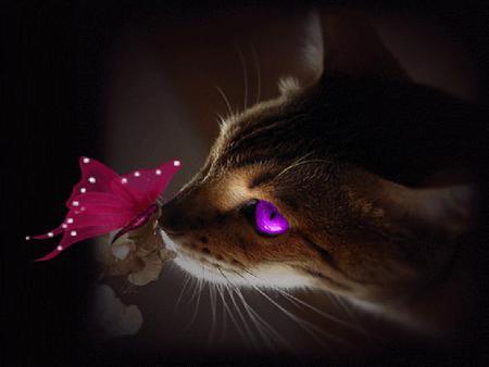 ET-cat