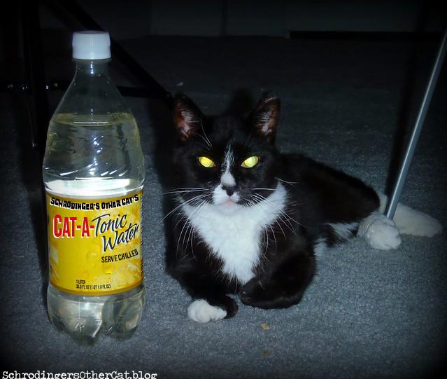 cat-a-tonic-water